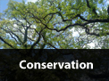 /services/conservation/