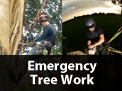 /services/emergency-tree-work/